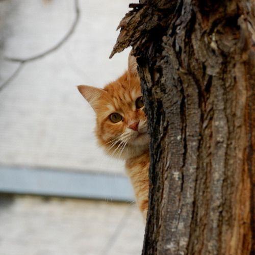 Pin by Rebecca Riley on Peep Eye Orange cats, Dog cat