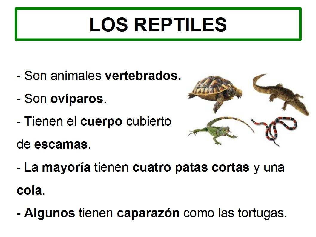 los reptiles primaria Buscar con Google (con imágenes