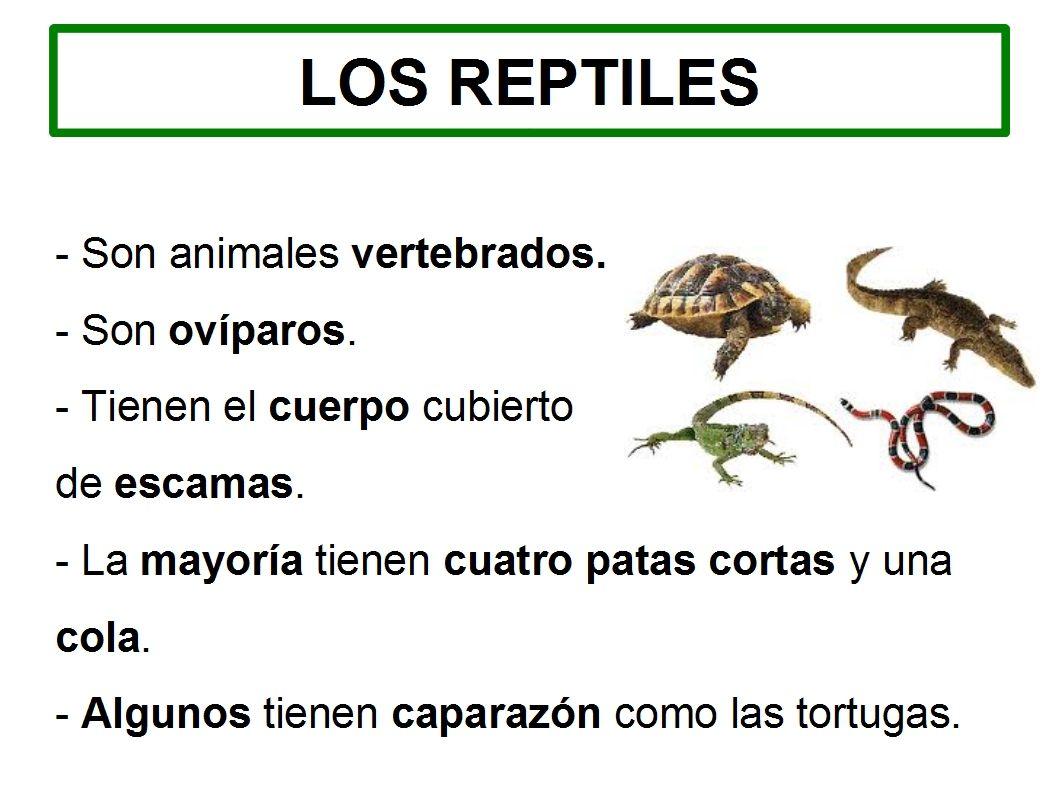 Los Reptiles Primaria
