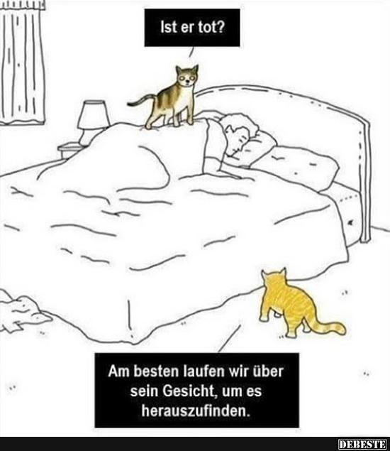 Ist Er Tot Lustige Bilder Spruche Witze Echt Lustig Katze