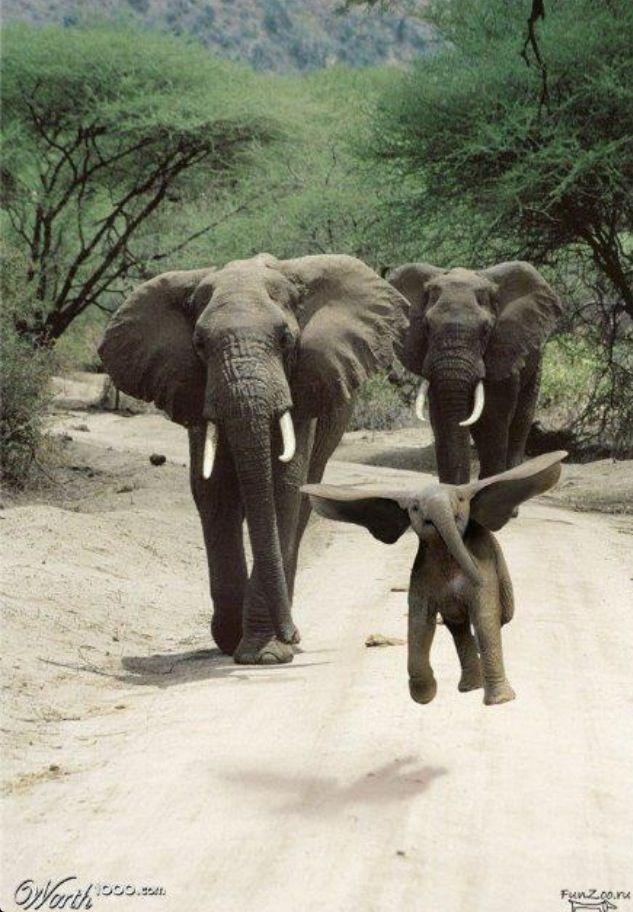 Real Life Dumbo Cute Animals Animals Wild Funny Animals