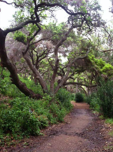 The Canyon Trail Along Mission Creek, Santa Barbara Botanic Garden