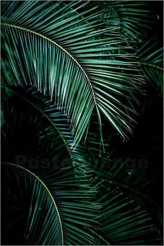 premium poster palm leaves 9 in 2019 gr ne pflanzen. Black Bedroom Furniture Sets. Home Design Ideas
