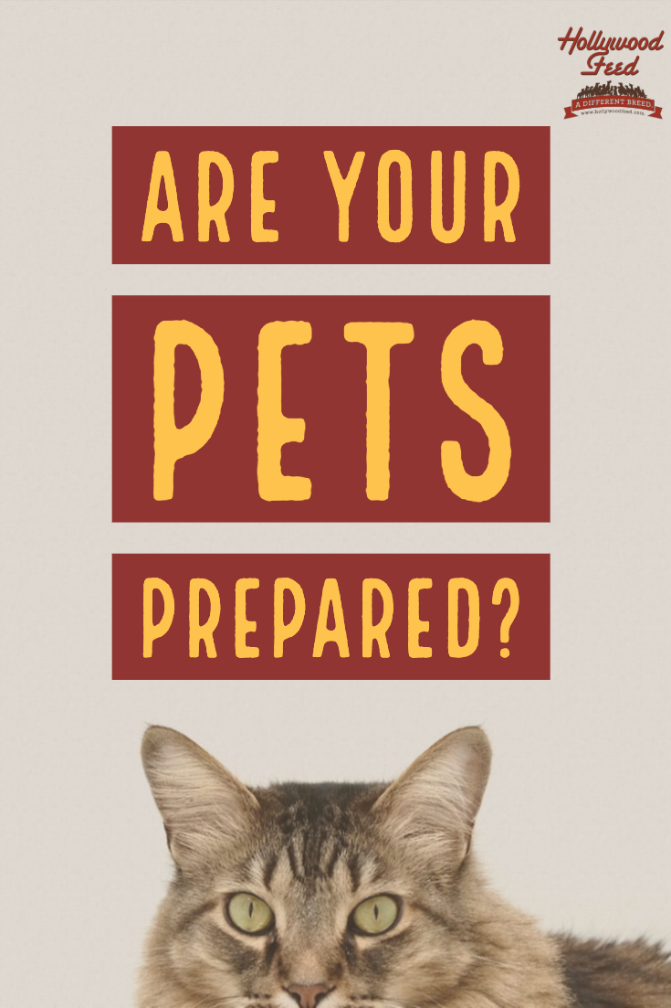 If you have a pet, you need an emergency pet plan. Check