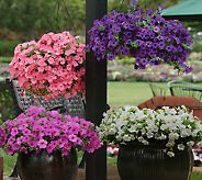 Patio Garden Best Sellers Garden Center For The Home Qvc