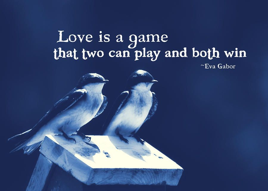 Blue Birds Quotes By Jamart Photography Love Birds Quotes Larry Bird Quotes Cute Love Quotes