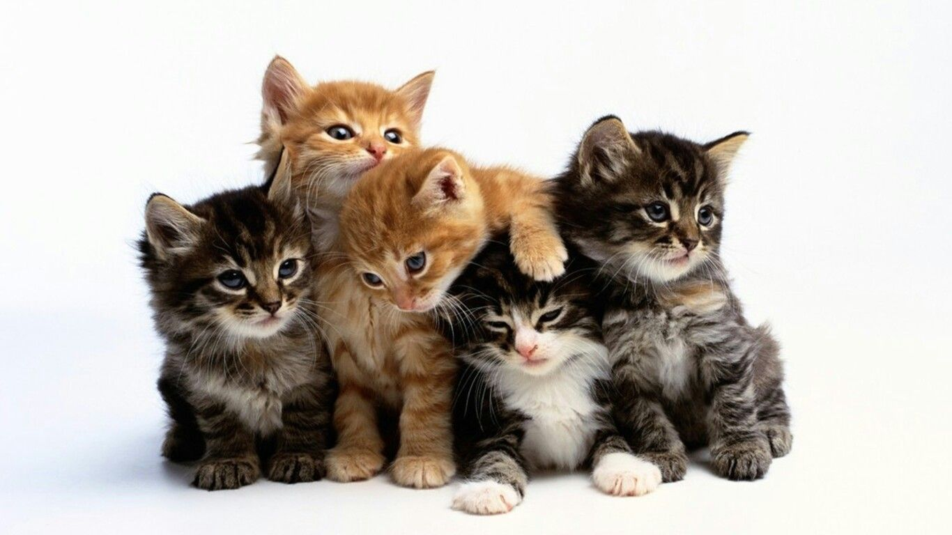 Cats Meowing Video Cute Cat Meowing Meowing Cats Meowing Sound Cat And Dog Funny Video Cats Meo Kittens Cutest Kitten Pictures Cute Kitten Gif