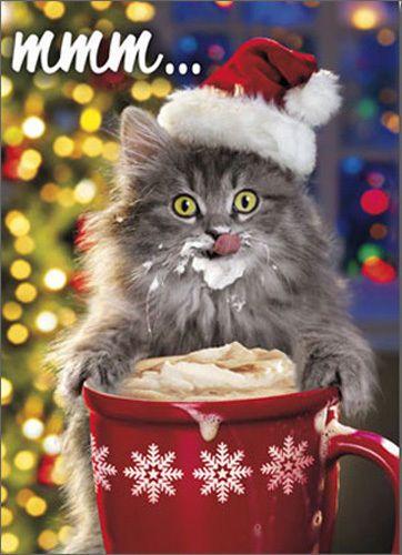 Hot-Chocolate-Kitty-Funny-Humorous-Christmas-Card-by-Avanti-Press