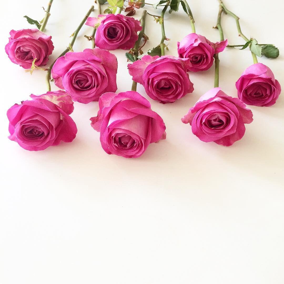 Bland De Finaste Rosor Jag Nagonsin Fatt Flower Background Iphone Book Flowers Flower Backgrounds