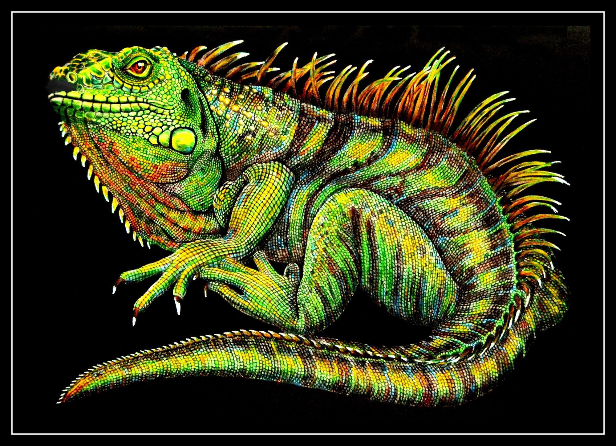 игуана картинка для рисования николаев выложил