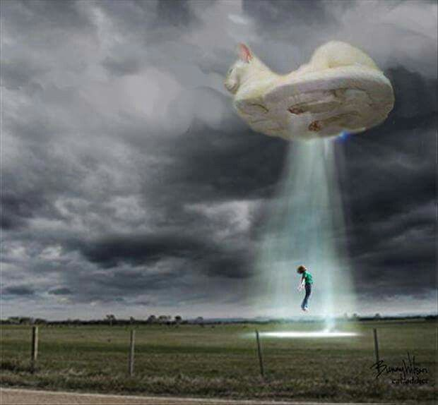 Flying Cat Abduction