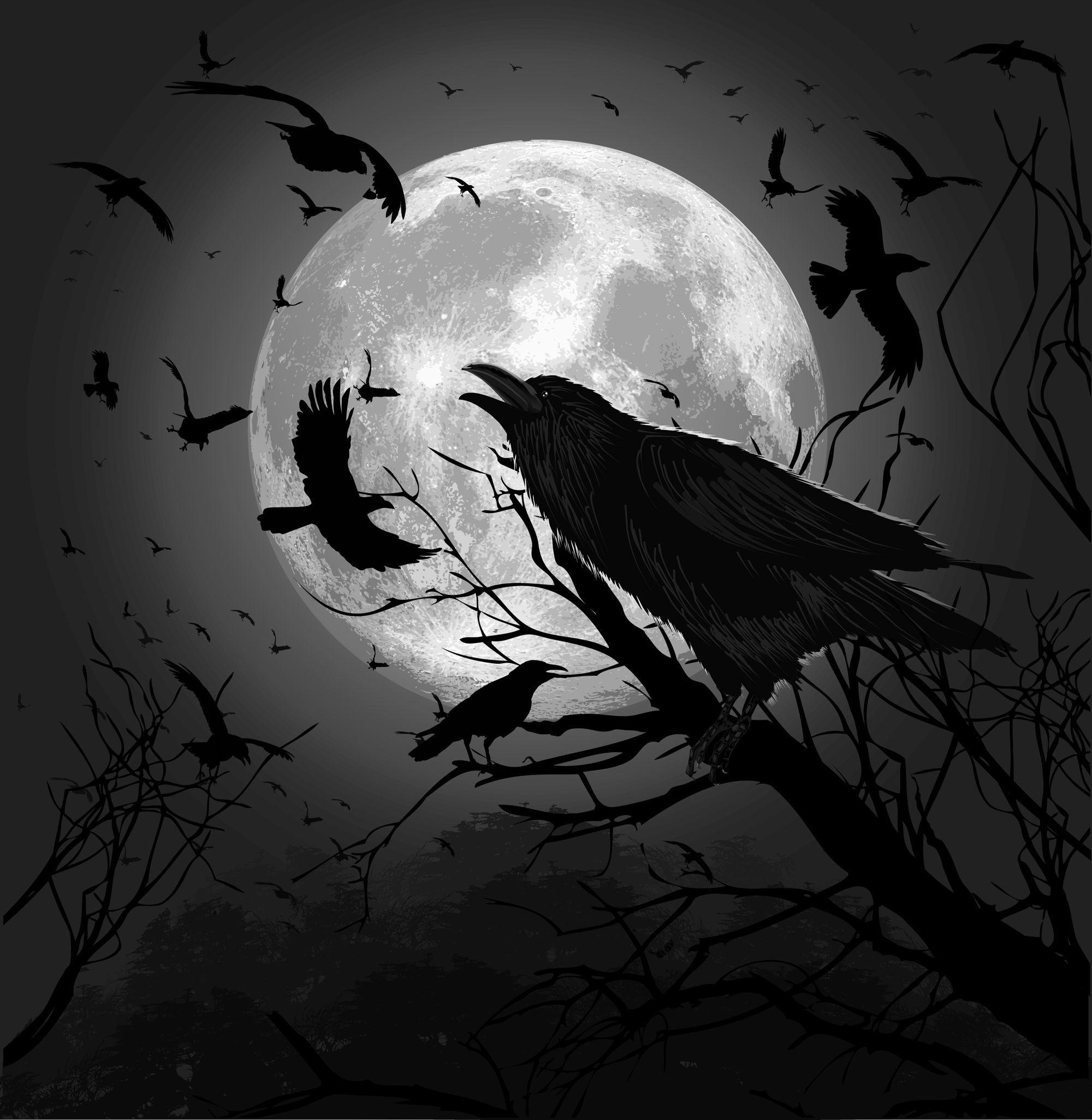 Картинки с воронами арты