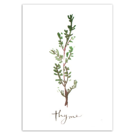 THYME Print, Herbs, Kitchen Wall Art Watercolor Painting, Food Poster, 5X7  Green