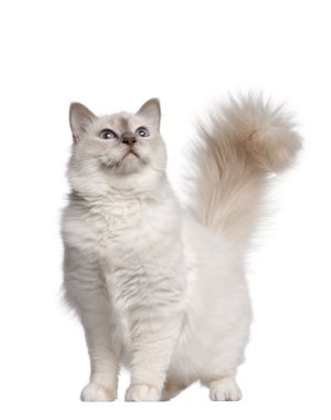 Pin On Top 25 Cat Breeds Information
