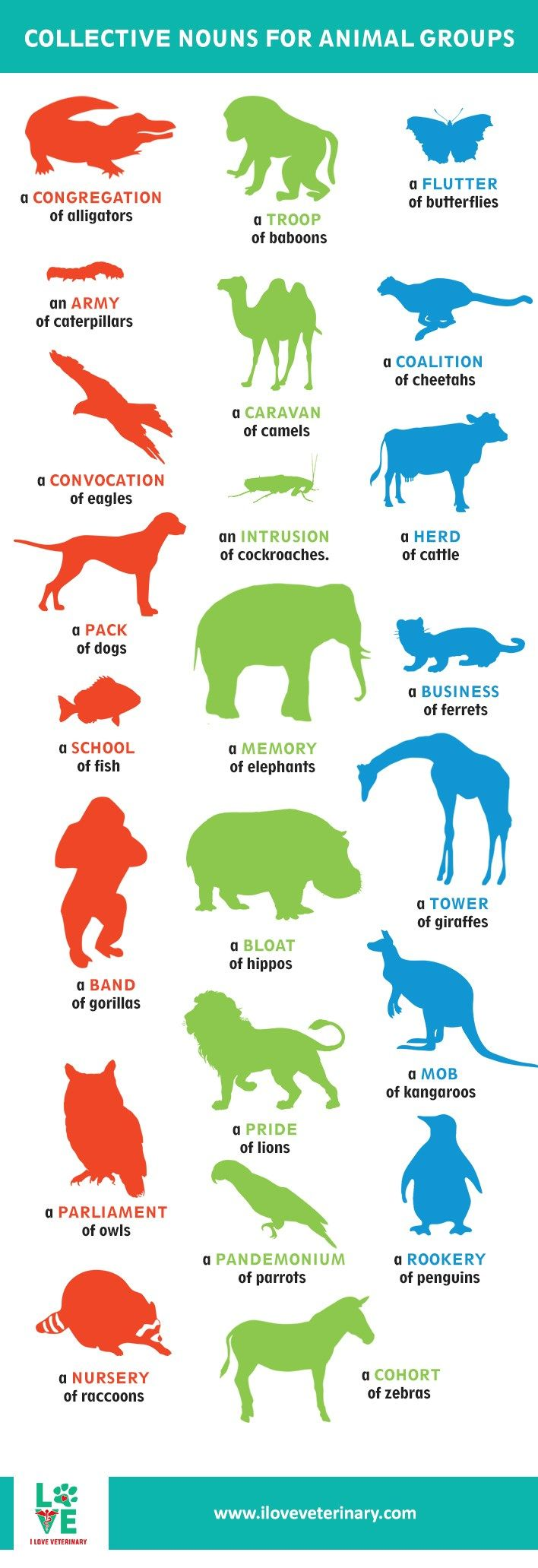 Collective Nouns for Animal Groups I Love Veterinary