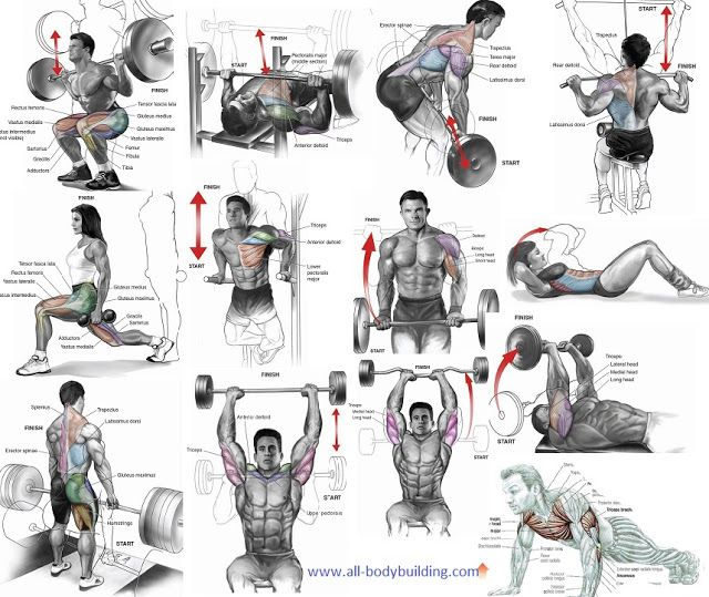 As You Go About Workout Routine It Is Important To Discover The Best Muscle Building Exercises