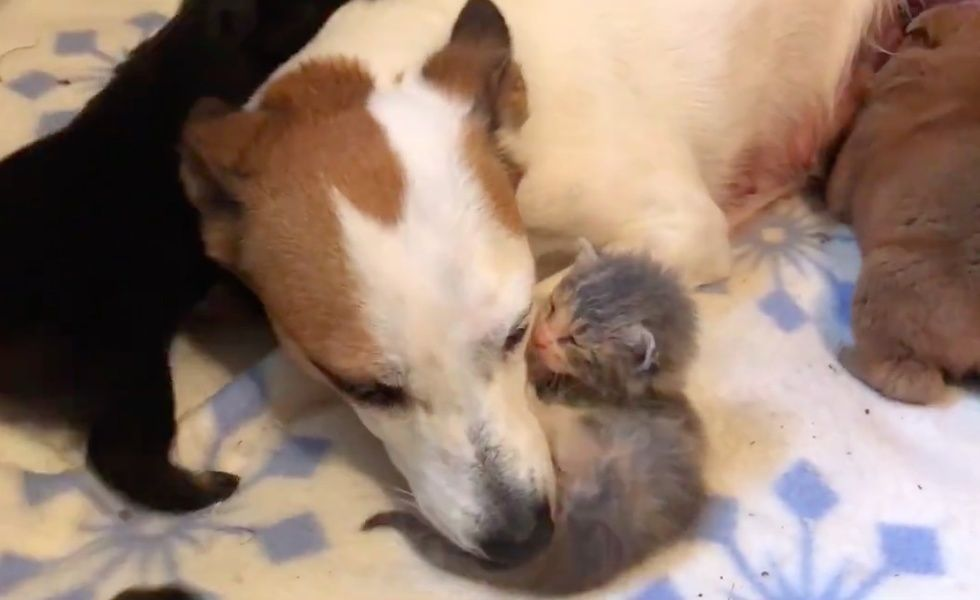 Orphaned Kitten Wouldn T Stop Crying Until She Found An Unlikely Mom Now 4 Months Later Kitten Stop Crying Foster Mom