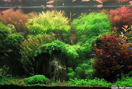 94 Koleksi Foto Aquarium Design Pinterest HD Terbaru Yang Bisa Anda Tiru