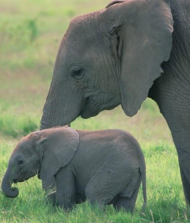 Elefantes bebes buscar con google herm - Fotos de elefantes bebes ...