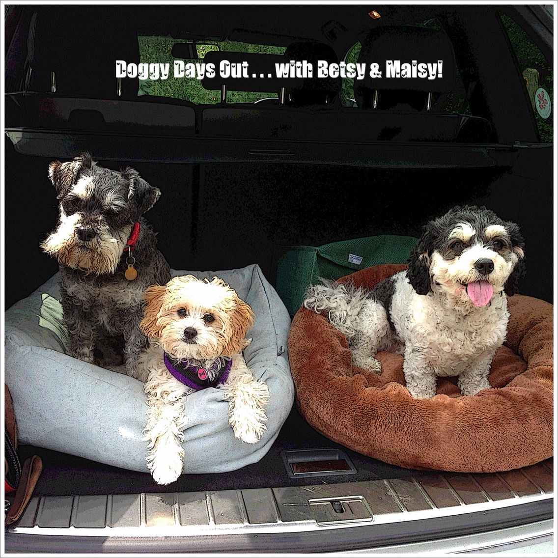 Doggy days out! Beautiful dogs, Cavapoo, Animals