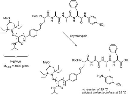 Example Of A Protein Polymer Macromolecules Pinterest