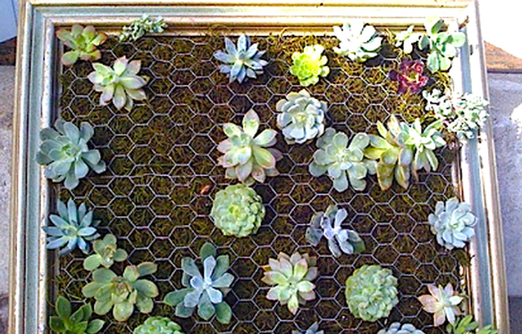 Ya sea por moda o por gusto un jard n vertical es una for Como hacer un jardin vertical casero y economico