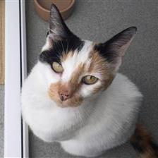 Poppy Cat Rehoming & Adoption Wood Green Animals