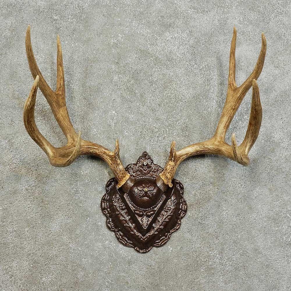 Antlers For Sale >> Mule Deer Antler Plaque Taxidermy Mount Art Inspiration Mule