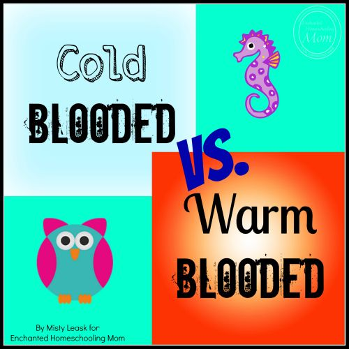 1000+ ideas about Warm Blooded on Pinterest | Ocean life ...