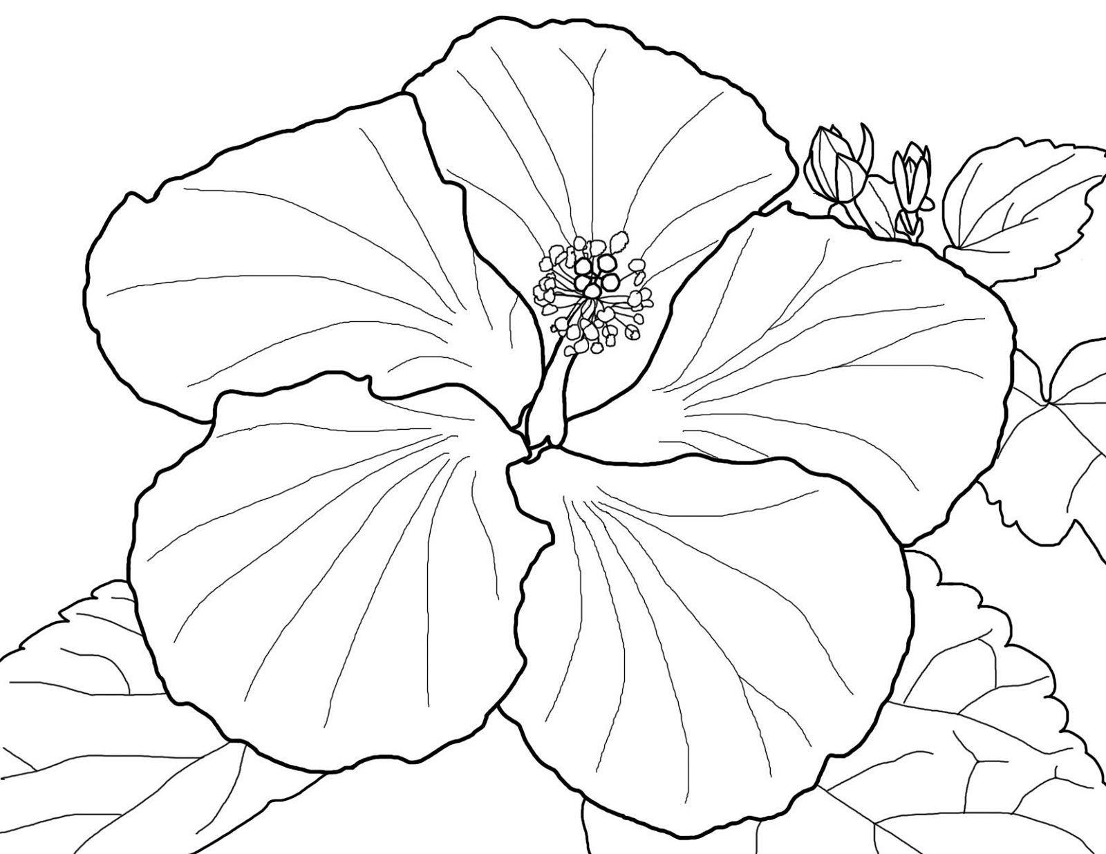 Hawaiian Flower Coloring Page Printable Shelter Coloring Flower Hawaiian Pag Flower Coloring Pages Printable Flower Coloring Pages Hibiscus Flower Drawing