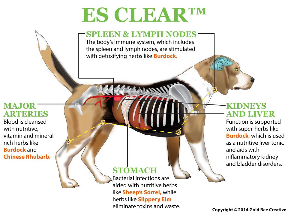 Es Clear For Dogs Dog Cancer Canine Cancer Pet Insurance Reviews