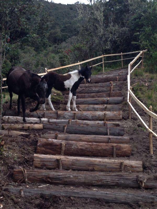 bildergebnis f r heuraufe selber bauen pferdehaltung pferde pferde pferdestall und paddock. Black Bedroom Furniture Sets. Home Design Ideas