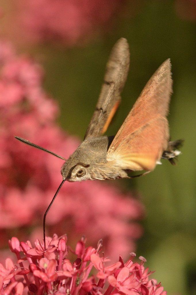 автомобилем колибри в приморском крае фото работает принципу что-нибудь