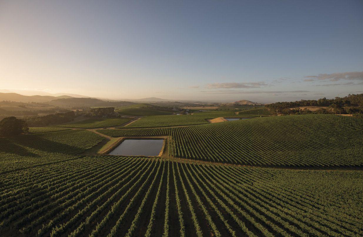 Yarra valley pinot noir and sparkling wines wine region