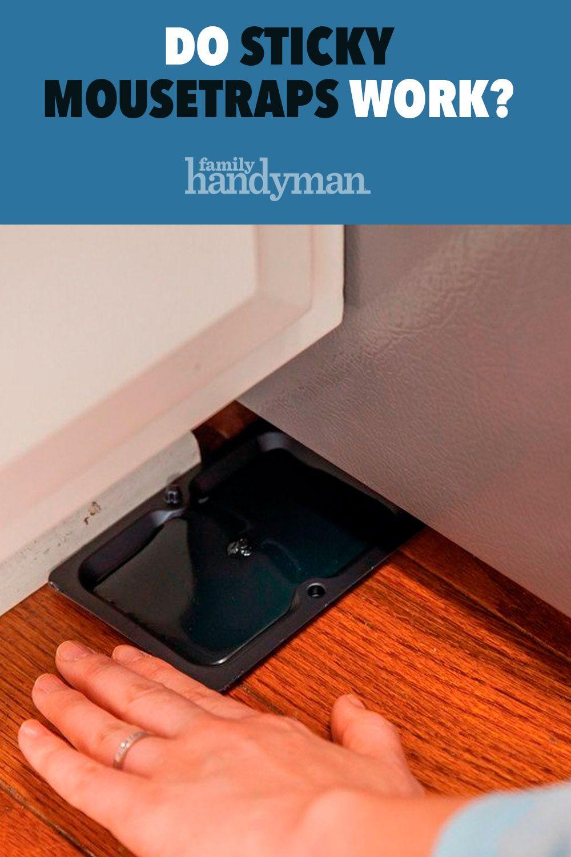 Do Sticky Mousetraps Work? | Mouse trap diy, Sticky, Mouse ...