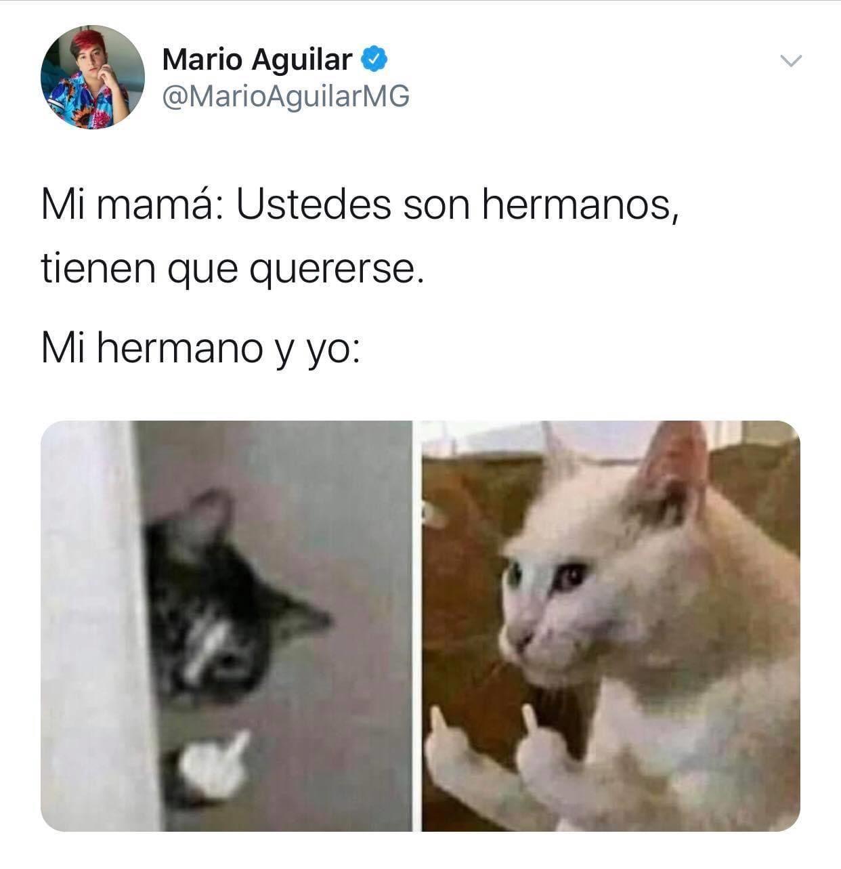 Cosas De Hermanos Memes Lindos Memes De Animales Chistosos Memes Divertidos
