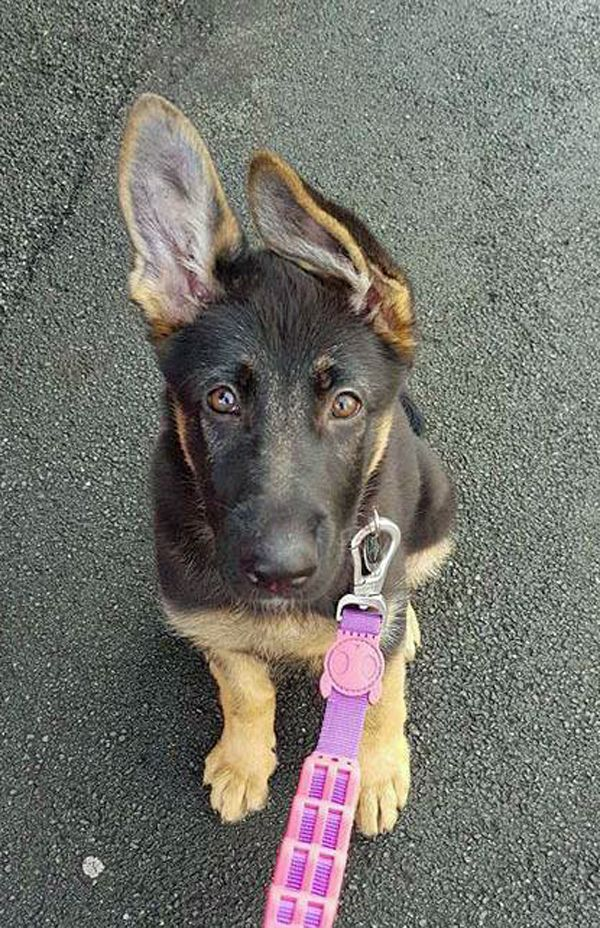 That face, that nose, those paws, those ears! Sasha here