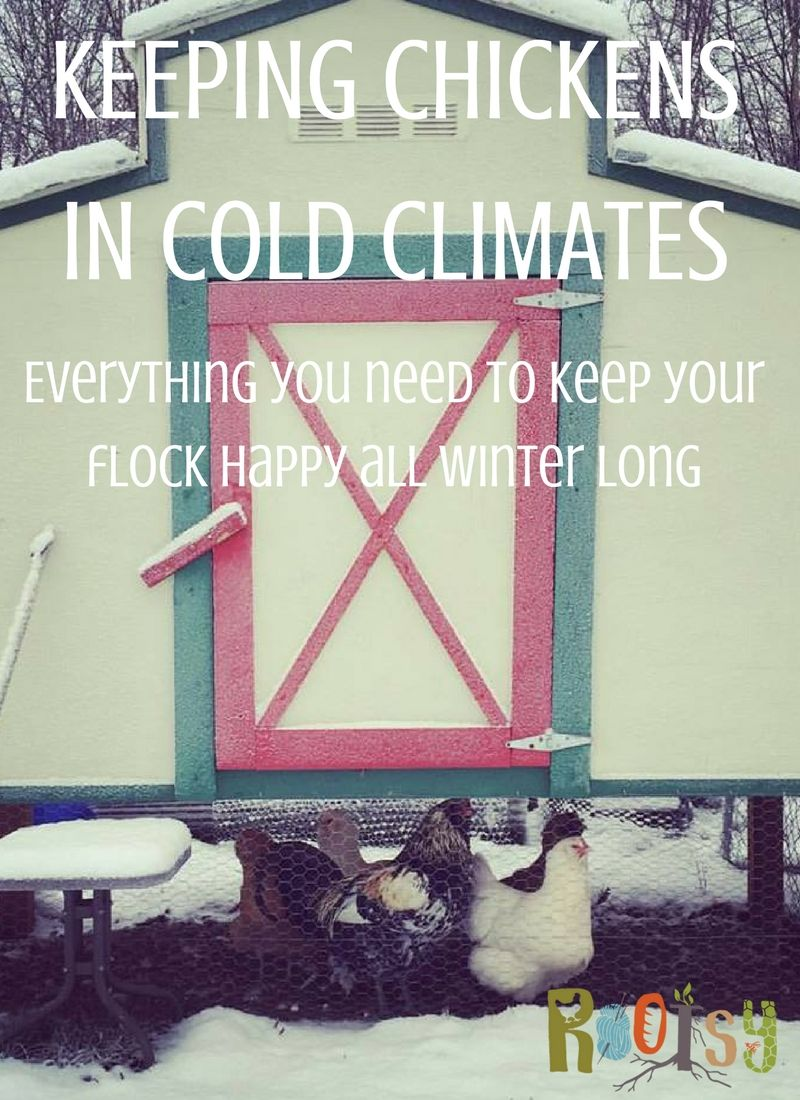 keeping chickens in cold climates keeping chickens backyard