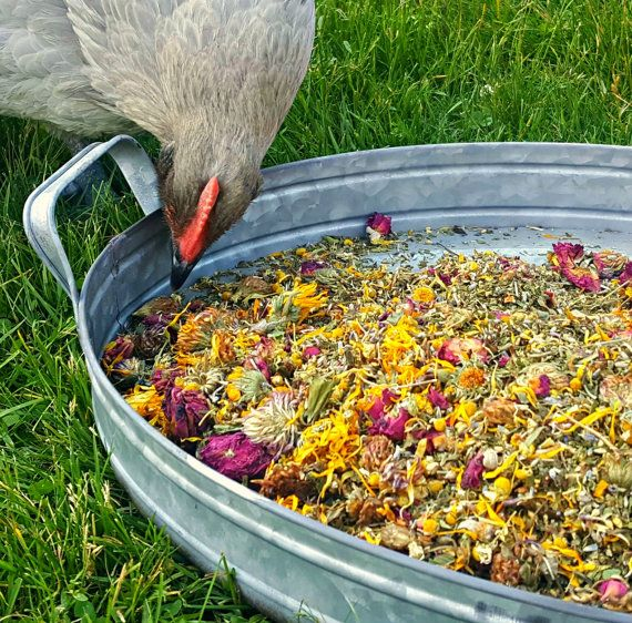Herbs For Hens COOP CONFETTI Chicken Aromatherapy LB Herbal Egg - Chicken co op with flowers