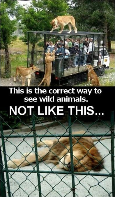 Zoo Animals In Cages Vs People In Cages This Is The Correct Way - 49 hilarious pictures people animals