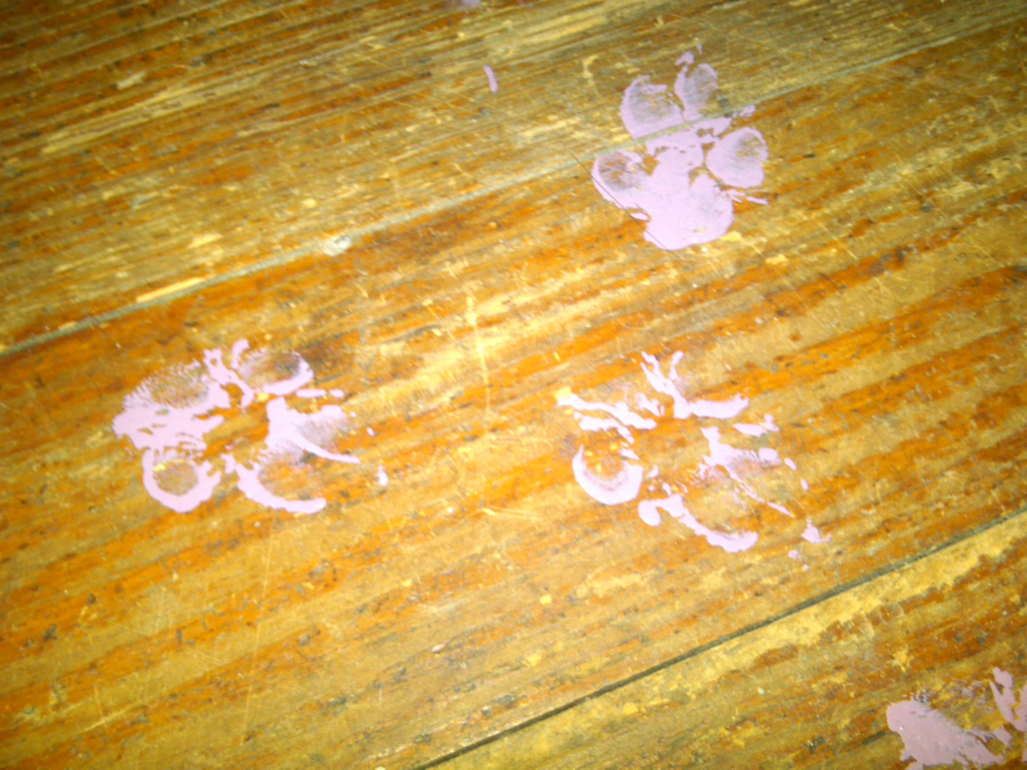 Walter's footprints... Love of my life, Of my life