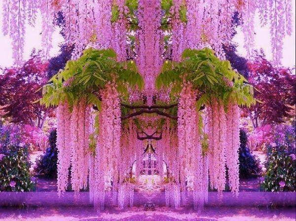 La plante glycine parfaite pour la d co jardin glycine for Jardin roses