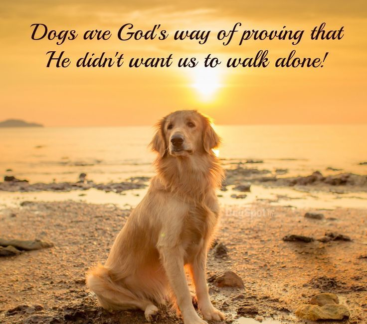 100 Best Quotes About Dogs Famous Dog Quotes Dog Quotes Dogs