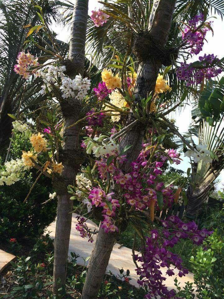 Dendrobium Orchids, Garden Plants, Orchids Garden, Tree Garden, Indoor  Garden, Garden Design, Tropical Flowers, Tropical Gardens, Beautiful Gardens
