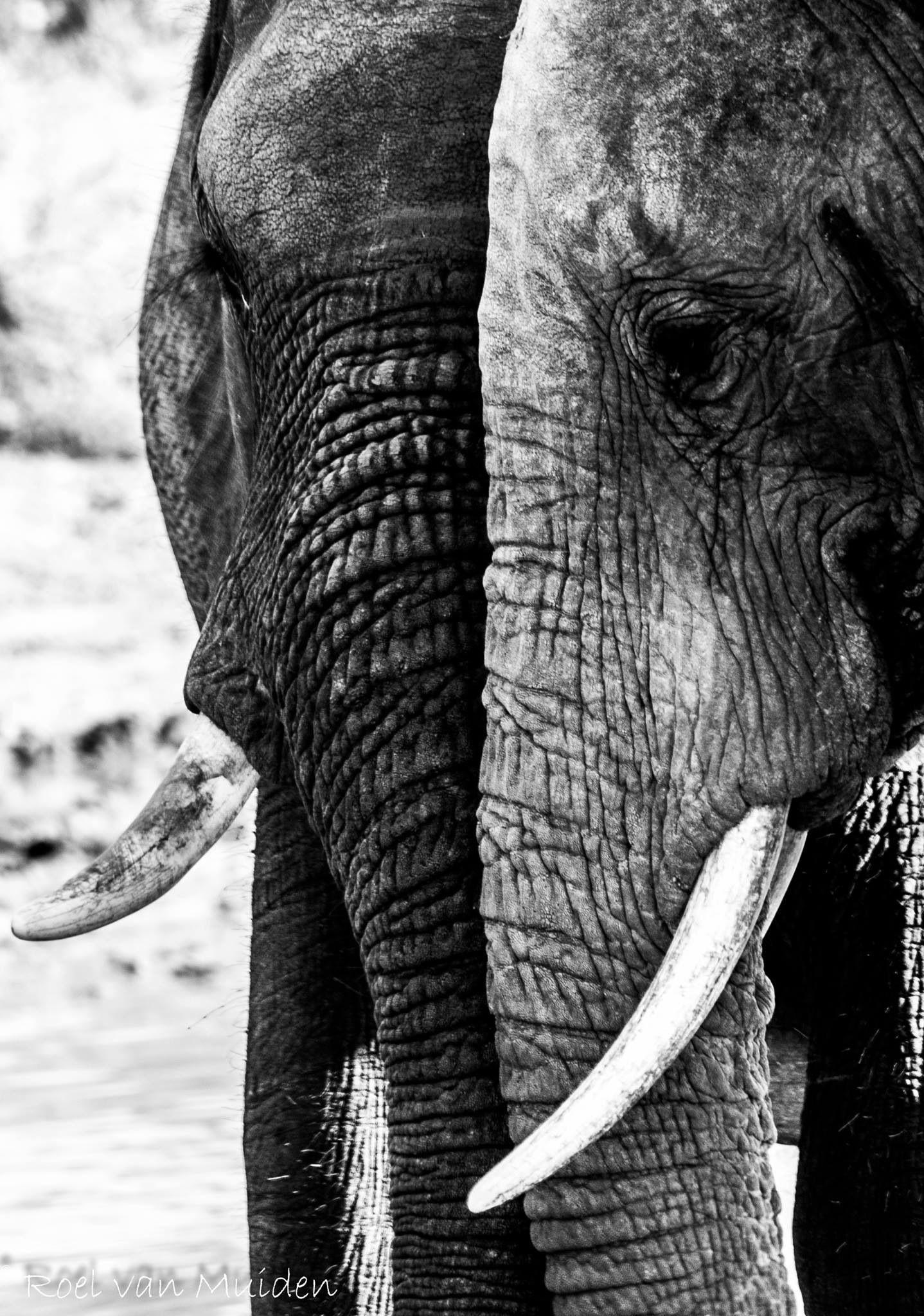 Elefantes adorables a la vista!