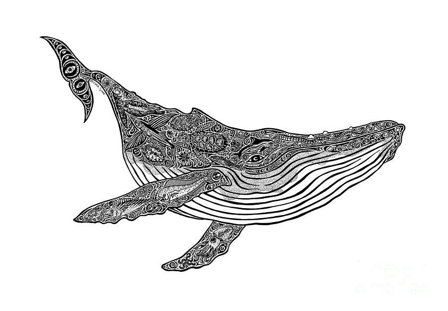 Whale Shark Line Art : Humpback whale drawings google search zentangle