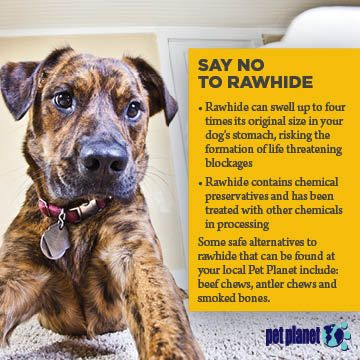 Pin By Pet Planet Health On Education Center Pet Health Pet