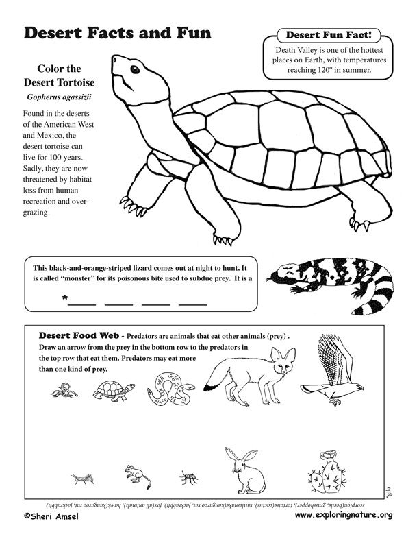 desert coloring pages for preschoolers - photo#22