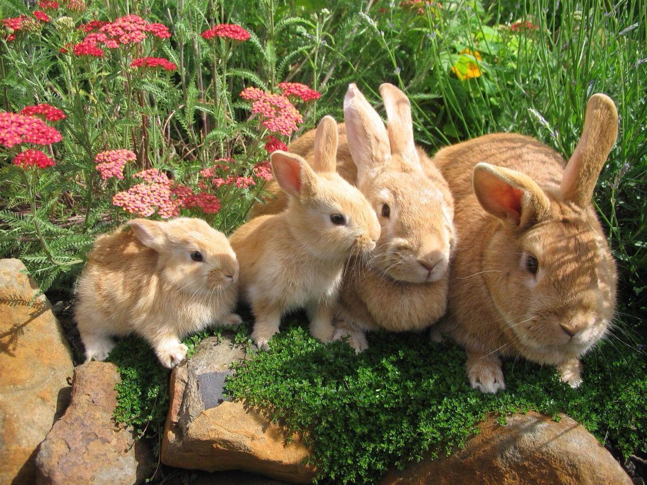 Домашние декоративные животные фото