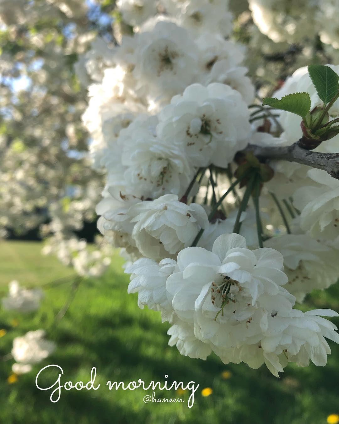 Goodmorning Morning White Flowers Park Photography Photoshoot Photo Goodmor Park Photography Pretty Flowers White Flowers